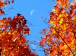 fall_colors_moon_rise